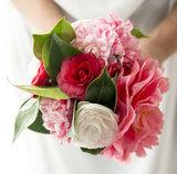 Camellia Japonica mix (SKCAME15GEMEP)_
