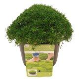 Match & Moss 'Pine Green' ® (SKMATC13PIGRB)_
