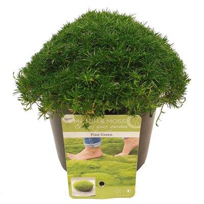 Match & Moss 'Pine Green' ®(SKMATC13PIGRB)