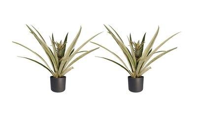 Decorum Duo 2 x Ananas Champaca met Elho B.for soft antracite ()
