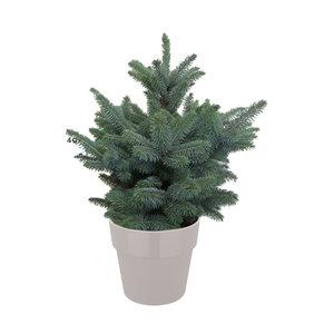 Picea Super Blue in ELHO b.for warm grijs (pipsblue28)